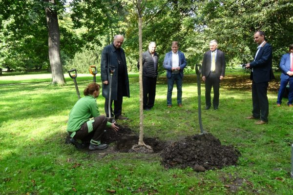 201002 strom Podzámka 5